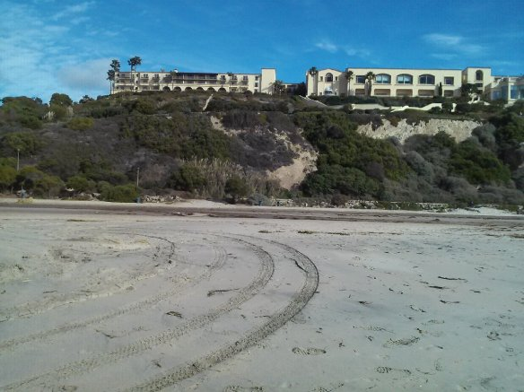 MAM-LB gmo pic dana point 2